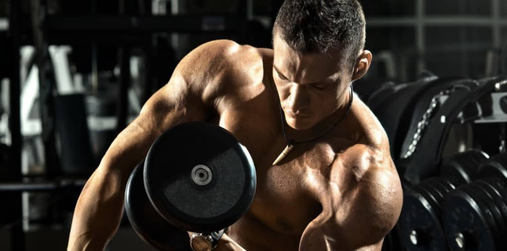 How to build muscle? Here are Tips to Build Muscle.