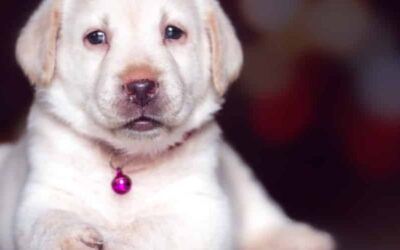 Symptoms Of Lymphatic Disease In Dogs