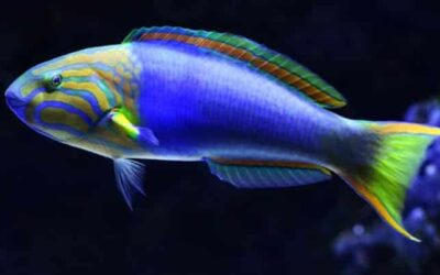What Does It Mean To See Fish In Your Dream